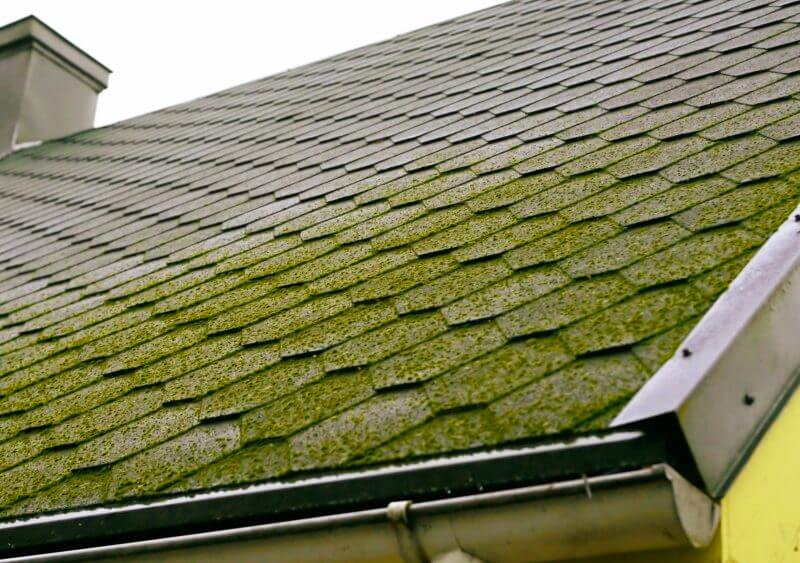 Tips to Remove Algae and Moss from Your Roof
