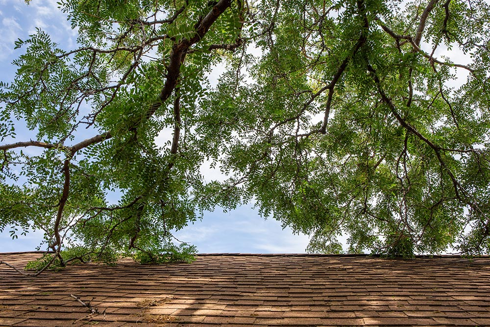 roof damage trees kansas city